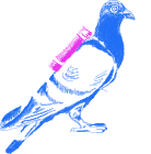 Drawing of a Carrier Pigeon